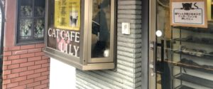 所沢にある猫カフェ③:CAT CAFE LILY