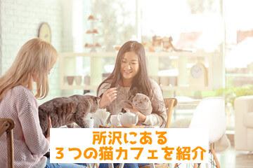 【まとめ】所沢にある3つの猫カフェについて紹介!